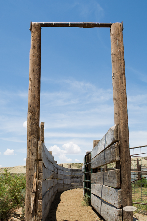 corral, images, wyoming, desered, cattle, photography, carol dunnigan photography-2