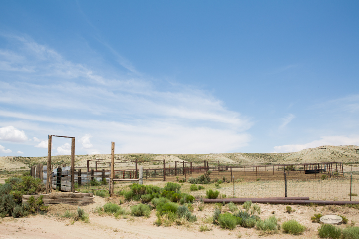 corral, images, wyoming, desered, cattle, photography, carol dunnigan photography