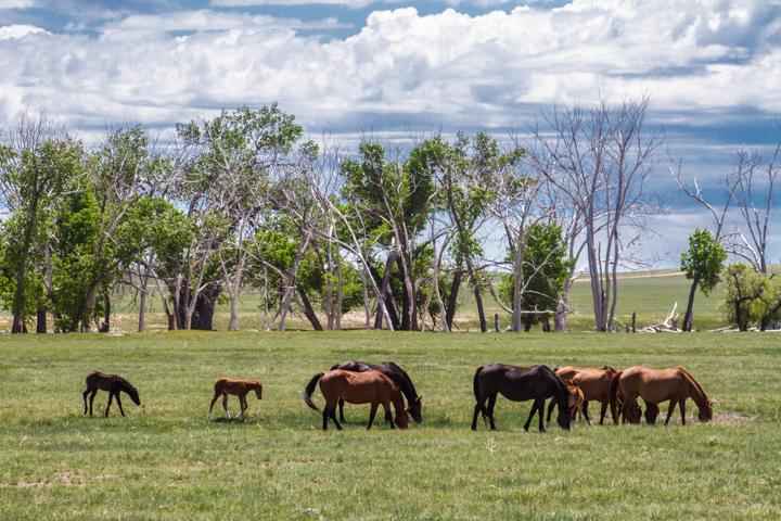 horses, wildlife, animals, images, photography, carol dunnigan photography