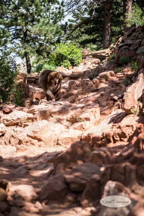 carol dunnigan photography, images, colorado, photographer, photography, boulder, hiking, places to go, outdoors, trails, centennial trail head, canon, canon 5d mark iii, Mt. Sanitas-6