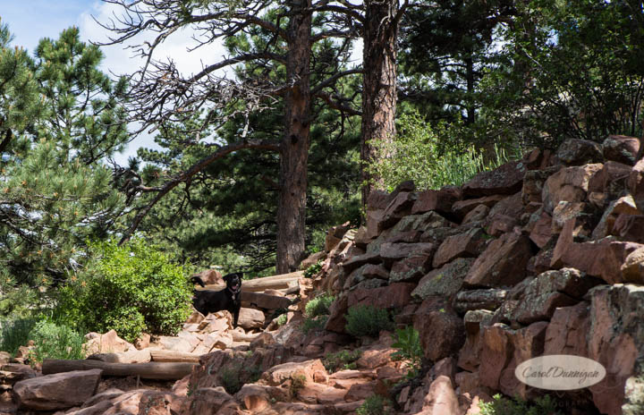 carol dunnigan photography, images, colorado, photographer, photography, boulder, hiking, places to go, outdoors, trails, centennial trail head, canon, canon 5d mark iii, Mt. Sanitas-7