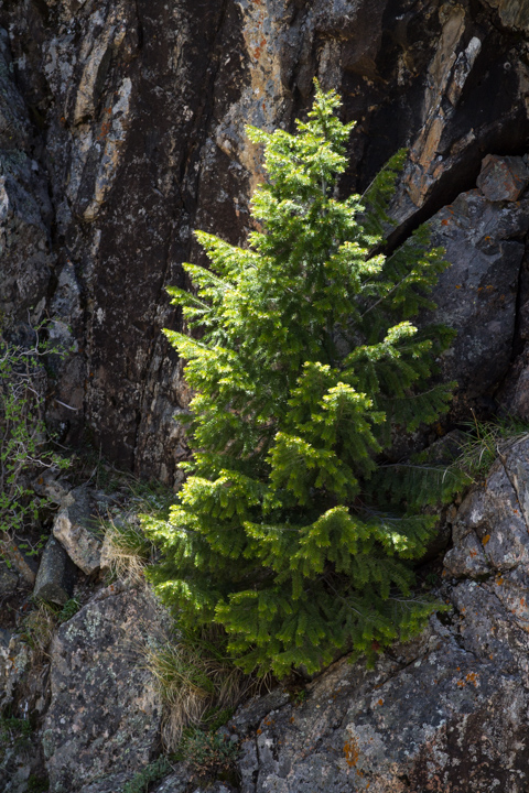 carol dunnigan photography, images, photography, colorado, poudre canyon, cameron pass, nature, outdoors, mountains-38