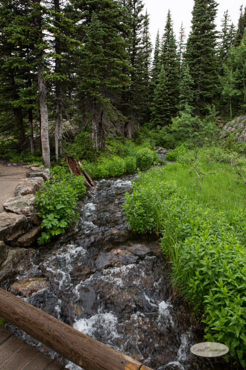 rocky mountain national park, images, photography, mountains, carol dunnigan photography-78