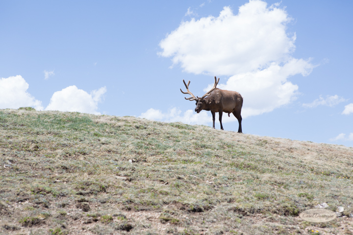 rocky mountain national park, trail ridge road, images, photography, mountains, carol dunnigan photography-3