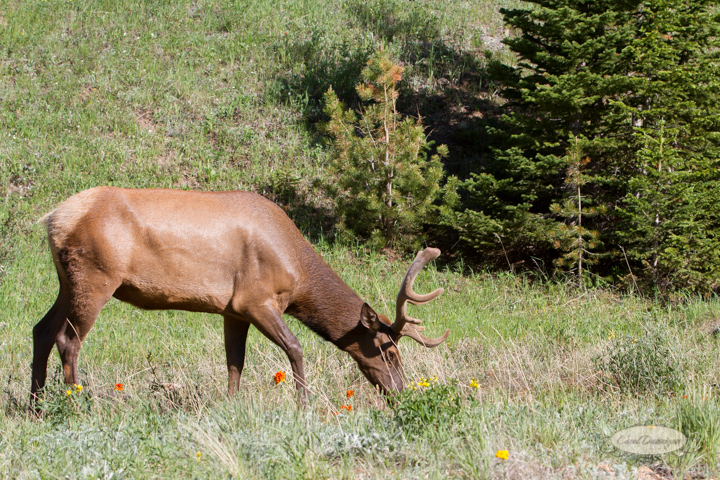 rocky mountain national park, trail ridge road, images, photography, mountains, carol dunnigan photography-31
