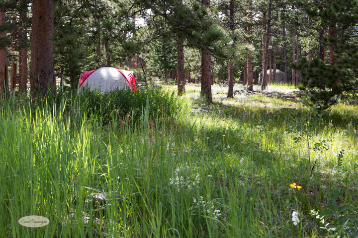 images, photography, colorado, landscape, nature, mountains, olive ridge campground, camping-60