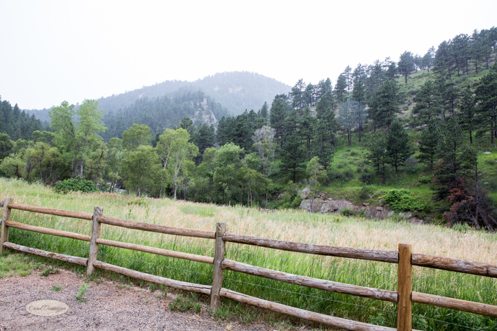 images, photography, nature, colorado, forest, foothills, mountains, trails, buckingham park, boulder-3