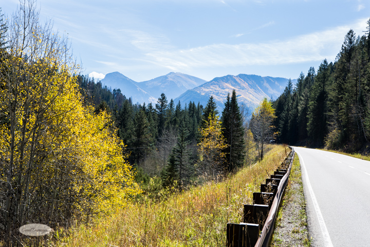 carol dunnigan photography, colorado, fall, autumn, images, photography, mountains, travel, white river national forest-7280
