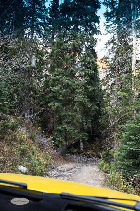carol dunnigan photography, colorado, fall, autumn, images, photography, mountains, travel, white river national forest, lead king basin loop, offroading, off-road, offroading-7464