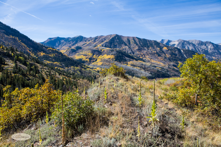 carol dunnigan photography, colorado, fall, autumn, images, photography, mountains, travel, white river national forest, lead king basin loop, offroading, off-road, offroading-7345