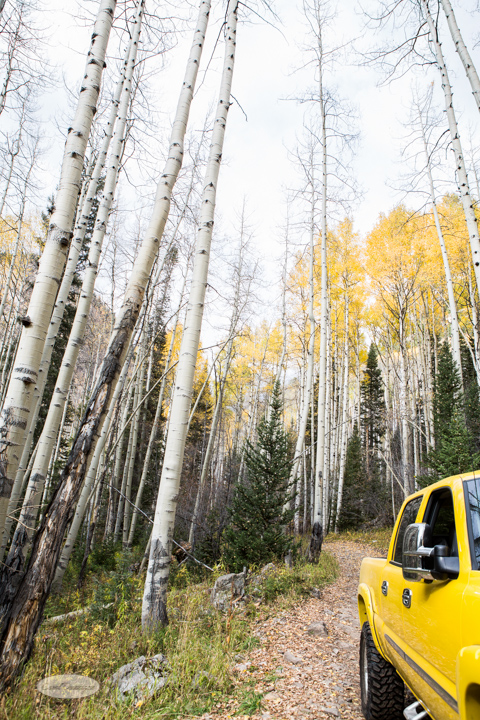 carol dunnigan photography, colorado, fall, autumn, images, photography, mountains, travel, white river national forest, lead king basin loop, offroading, off-road, offroading, lizard lake, crystal city-7530